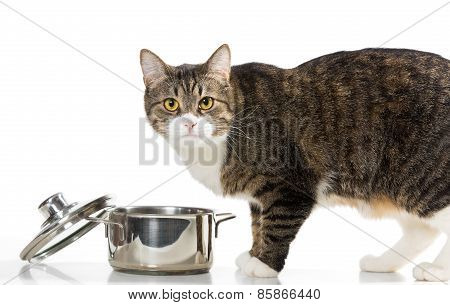 Cat Steals Food From The Pot