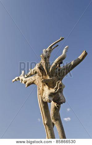 Strange Wooden Formation In The Summer