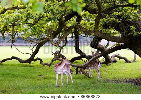 Two Deers In Beautiful Forest Background