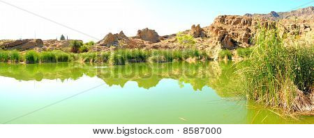 Stagnant Desert Pond Panorama