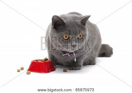 Cat Sitting Around A Bowl Of Food On A White Background Close-up