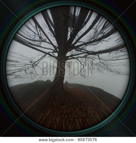 View Through The Lens