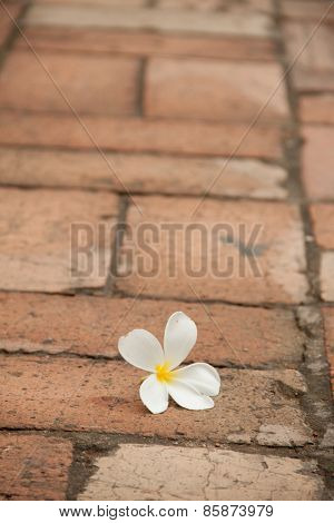 White flower on the pavement