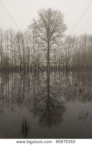 Tree outline with reflection in the morning mist