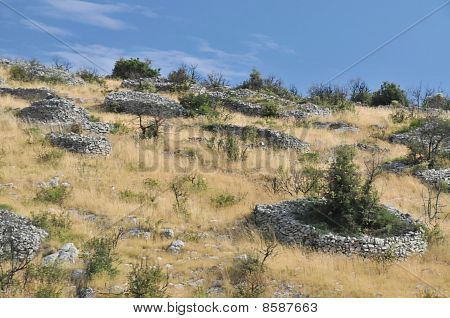 Field With Rock Walls Around Plants