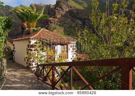 Nature In Masca Village, Tenerife
