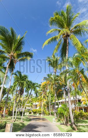 Park With Lane With Coconut Palm Trees