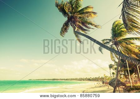 Palm Trees Grow On A Beach. Coast Of Atlantic Ocean