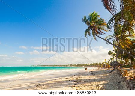 Palm Trees Grow On Sandy Beach. Atlantic Ocean Coast