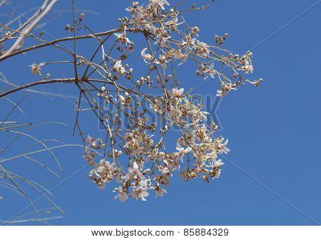 Jasmine blossom, selective focus