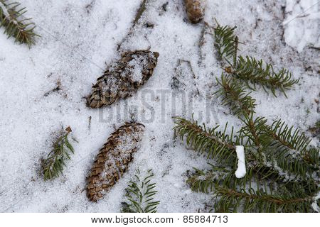 Pinecones On Snowy Ground