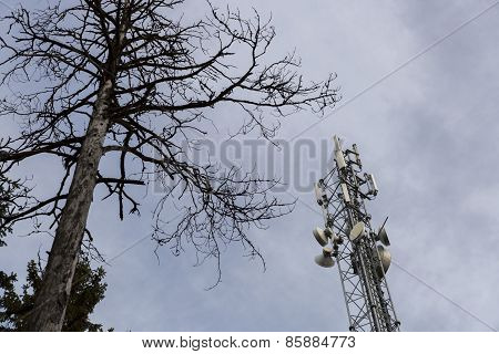 Cell Phone Tower With Dead Tree