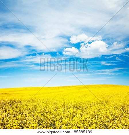 Summer Landscape with Rape Field and Blue Sky