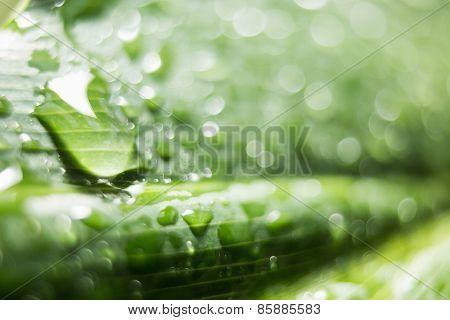 A green leaf in close up shot