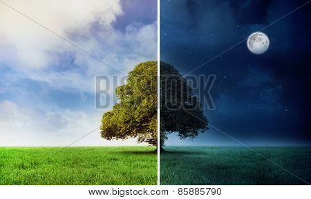 Digitally generated Night and day scene with tree