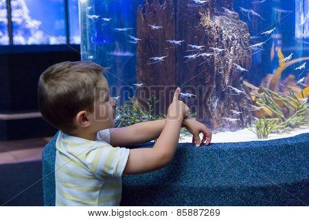 Cute boy looking at fish tank at the aquarium