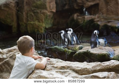 Little boy looking at penguins at the aquarium