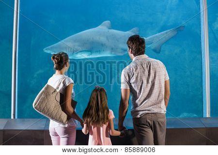 Happy family looking at shark at the aquarium