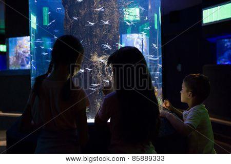 Cute children looking at fish tank at the aquarium