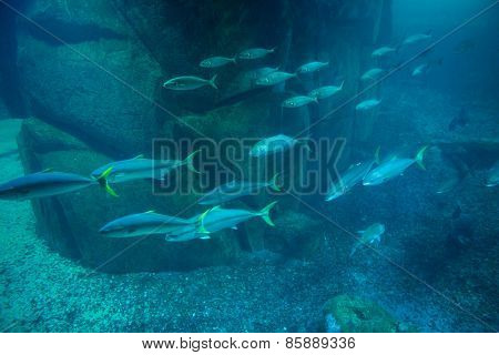 Fish swimming in tank at the aquarium