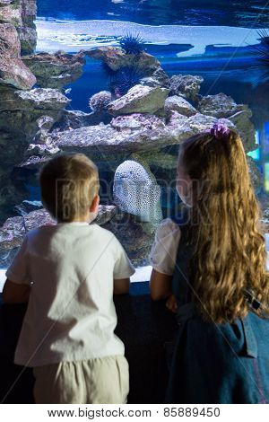 Little siblings looking at fish tank at the aquarium