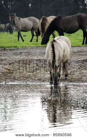 Horse at the watering