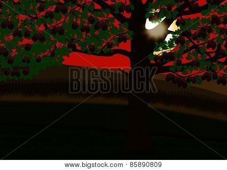 Oak Tree At Sunset