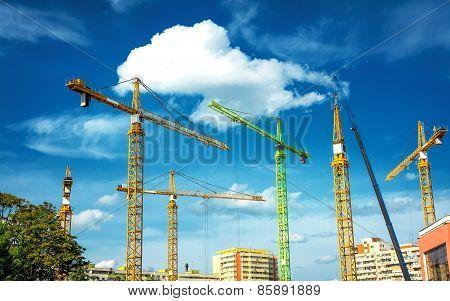 Many Cranes