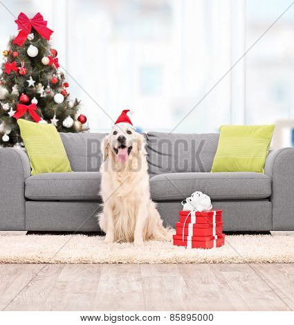 Dog with Santa hat sitting by a sofa indoors shot with tilt and shift lens