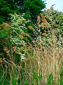 stock photo of hackney  - Rural reed landscape photographed at Hackney Marshes at Newton Abbot in Devon - JPG