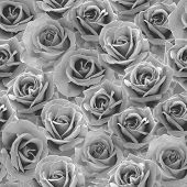 picture of nostalgic  - Plenty  natural roses seamless background - JPG