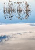 image of pampa  - PAMPAS IN A CALM LAKE WITH CLOUDS REFLEX ON THE WATER - JPG