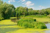 stock photo of wetland  - Wetland Lake of the Woods - JPG