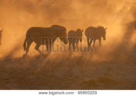 Zebras Walking Into A Dusty Sunset