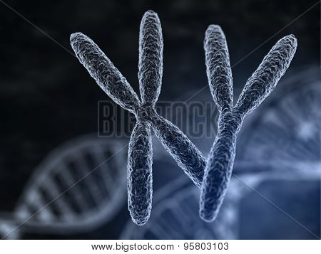 Man And Woman Chromosomes