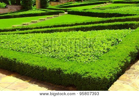 Shaped bushes in a park