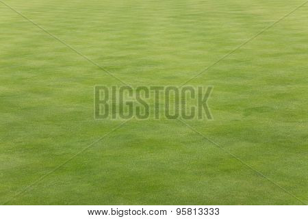 Short mown grass on a bowling green