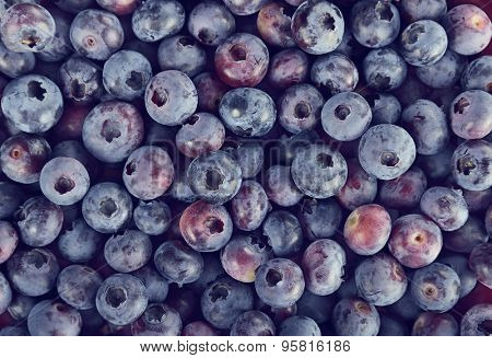 Blueberries Close Up For Background