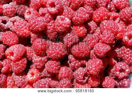 Dozens Of Bright Red, Fresh Raspberries