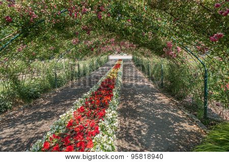 Rose Arbor At Point Defiance 3
