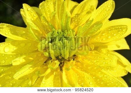 Flower With Waterdrops