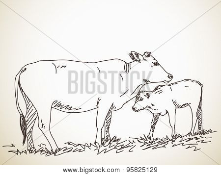 Sketch of cow and calf, Hand drawn vector illustration