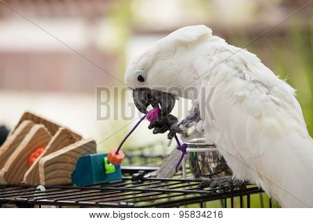 Playful White Cockatoo