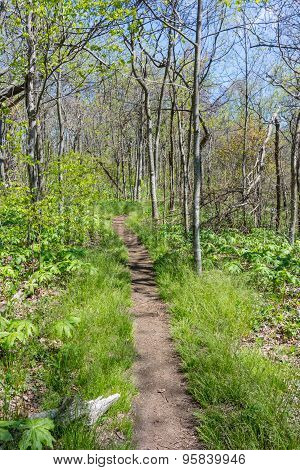Appalachian Trail In Spring