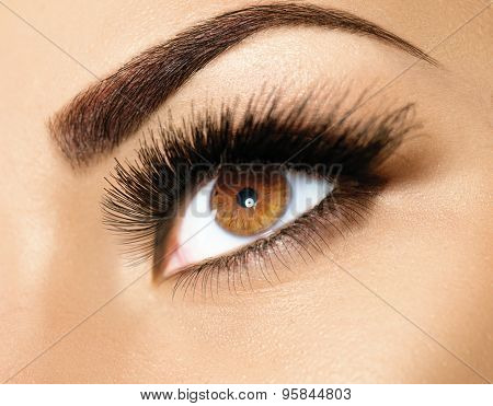 Brown Eye Makeup. Eyes Make-up. Beautiful Eyes Make up detail, perfect beauty eyebrows