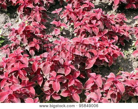 Red Leafs On Flowerbed