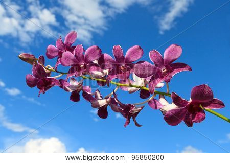 Purple Orchid On A Sky Background With Clouds