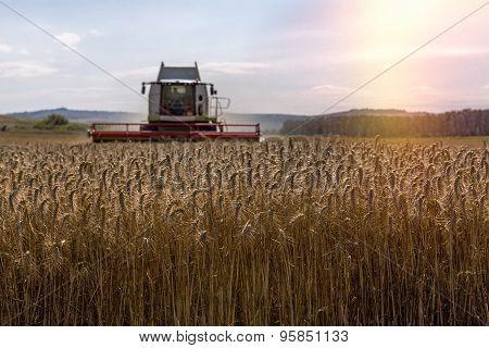 Harvesting Grain Cereals