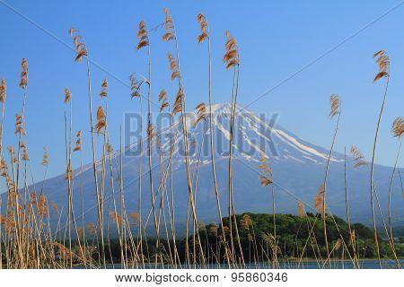 Path to Mt.Fuji at moonrise Lake kawaguchi  Japan