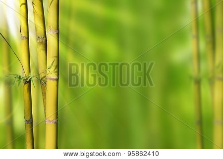 Gold Green stems bamboo and green abstract background